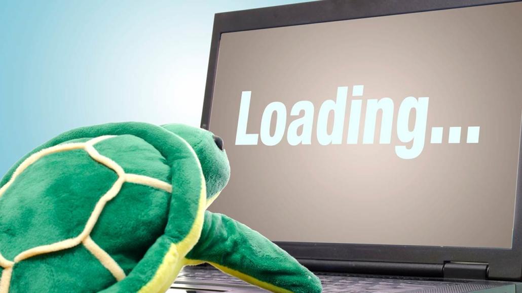 tortoise watching loading screen - CollegeMarker